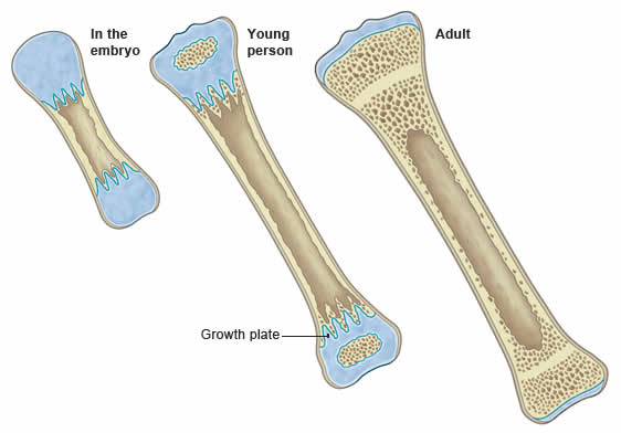 Bone_Growth